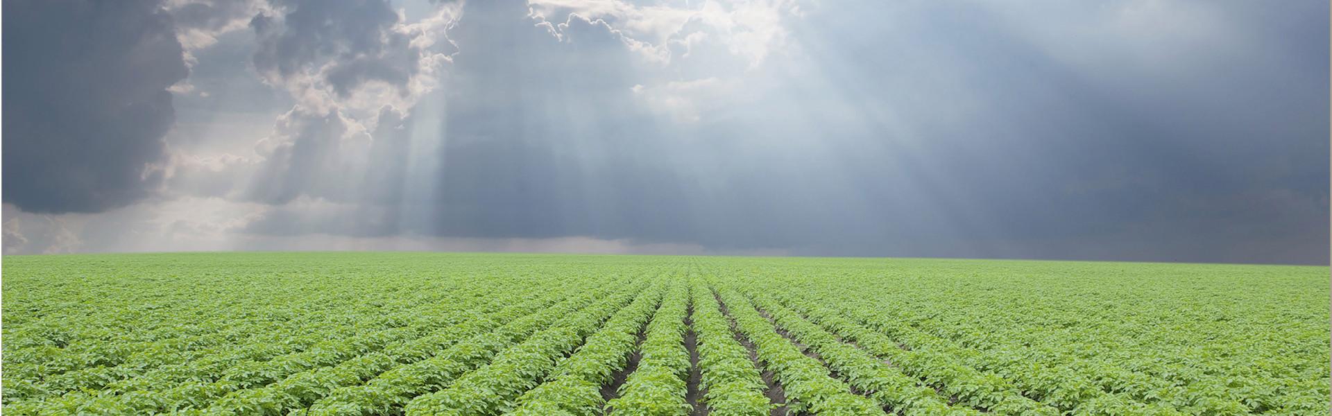 Lectoraat Aardappelketen en sectorinnovatie