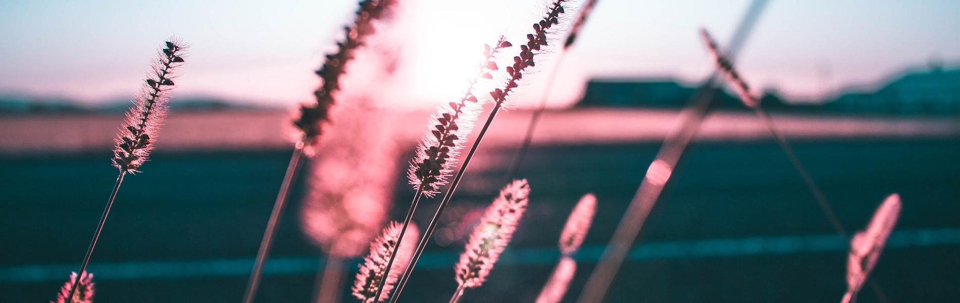 Grassprieten en avondzon