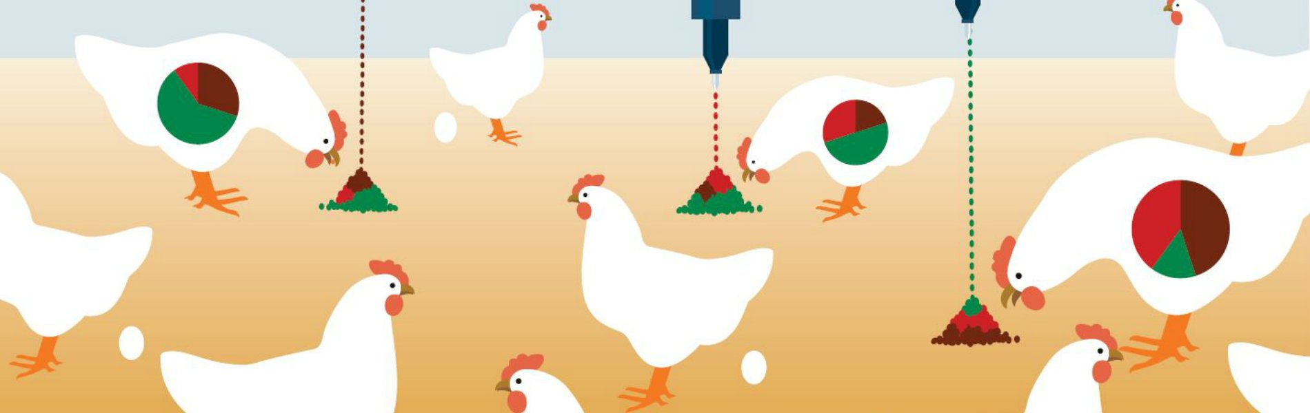 Header Poultry Star Foundation