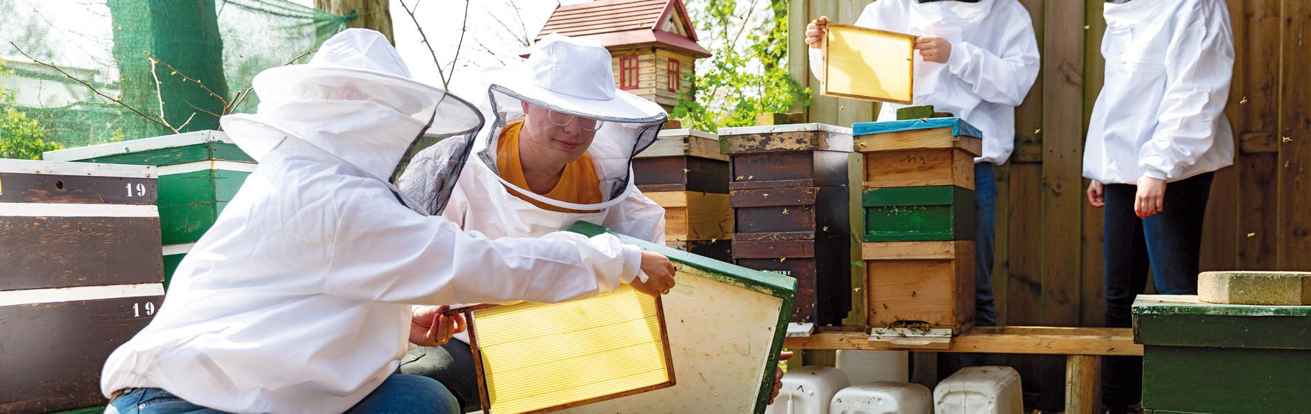 Studenten Toegepaste biologie doen bijen onderzoek Aeres MBO Ede