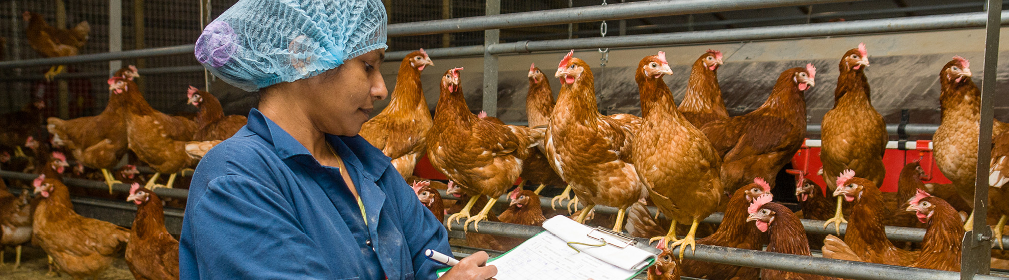 Women taking notes in poultry house